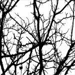 Tree 04 (of 6)