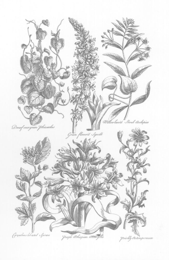 Classical plants ~ 250 x 380mm