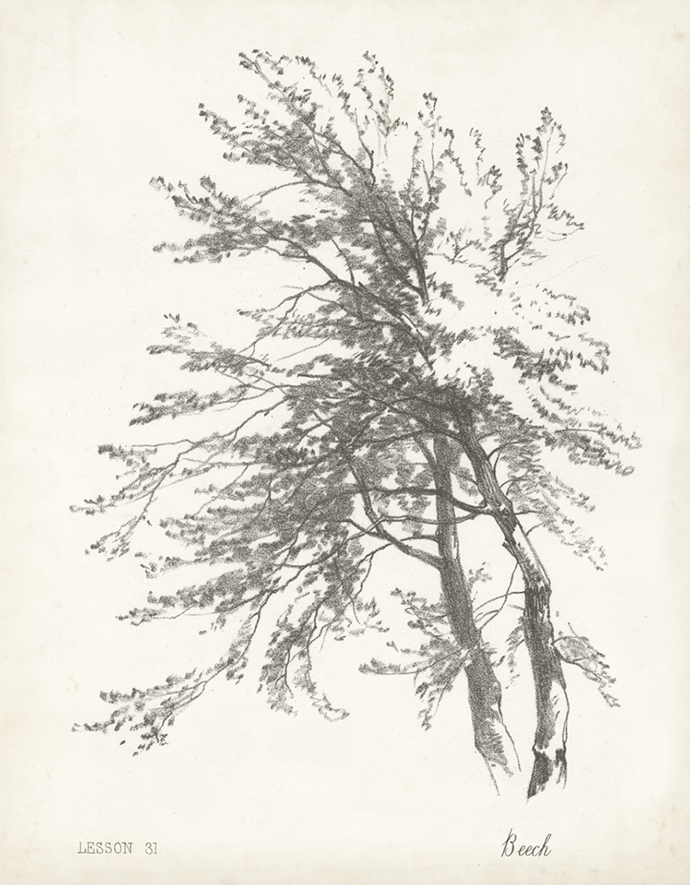 B/W tree sketches ~ 355 x 455mm