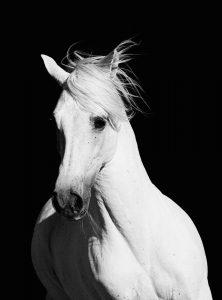 BW Horse 1  (of 4)