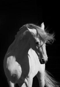 BW Horse 2  (of 4)