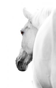 BW Horse 3  (of 4)