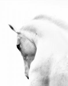 BW Horse 4  (of 4)