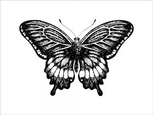 Butterfly (of 12)