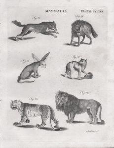 Classical Fauna 1 (of 7)