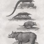 Classical Fauna 2 (of 7)