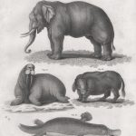 Classical Fauna 3 (of 7)