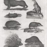 Classical Fauna 4 (of 7)