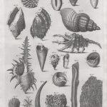 Classical Shells 1 (of 14)