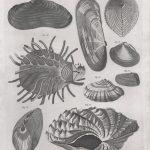 Classical Shells 3 (of 14)