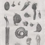 Classical Shells 4 (of 14)