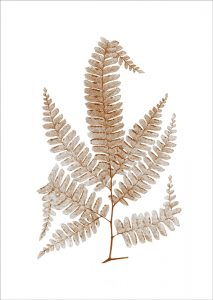 FERN 4 Sepia (of 16)