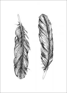 Feathers (of 12)