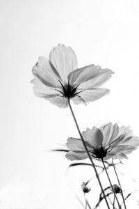 Flower X-ray 3 (of 10)
