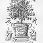 Fruit Tree 4 (of 4)
