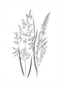 GRASS 2 (of 16)