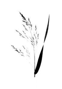 GRASS 3 (of 16)