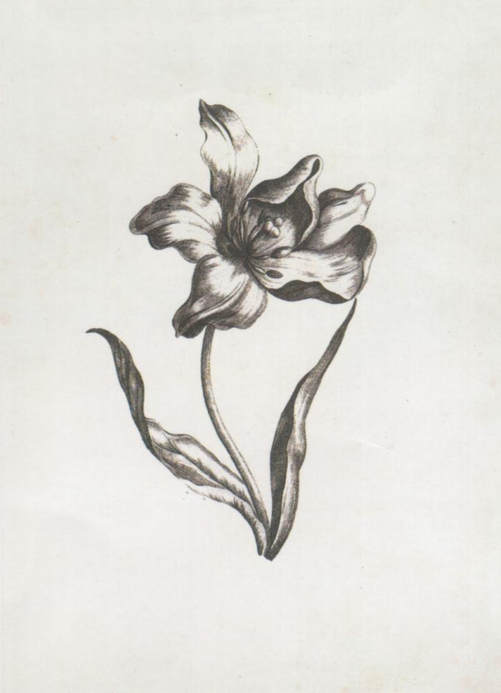 Tulips ~ 300 x 450mm
