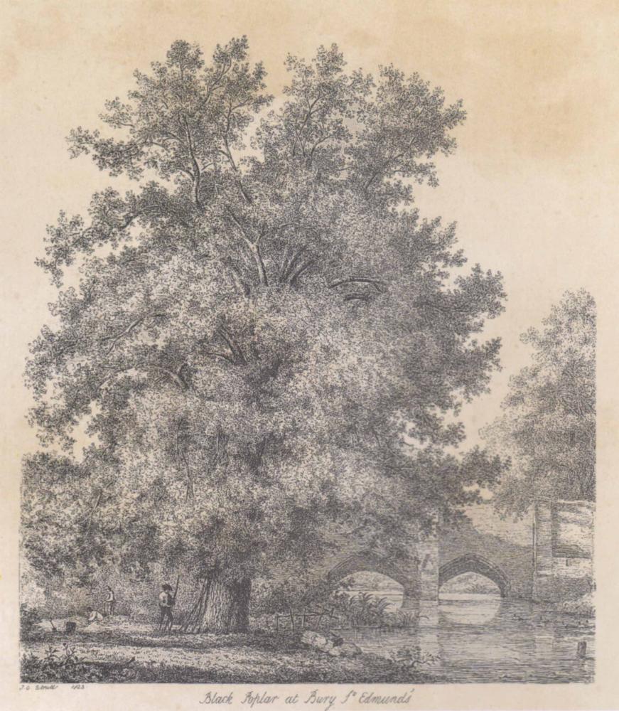 Strutt oaks ~ 700 x 820mm