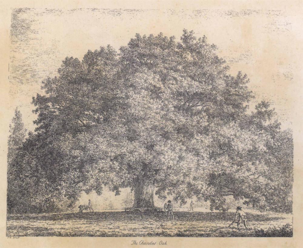 Strutt oaks ~ 820 x 700mm