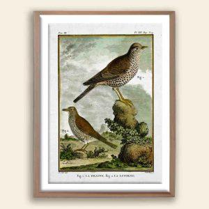 Classical Birds