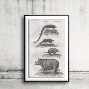 Classical Fauna