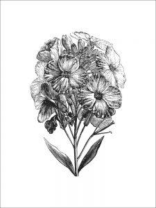 Flowers (of 12)