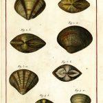 Classical Shells 5 (of 14)