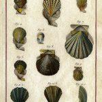 Classical Shells 6 (of 14)