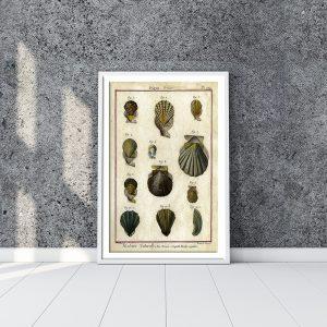 Classical Shells & Fossils