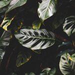 Botanicals 3 ( of 9 )