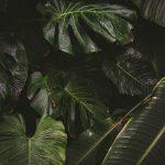 Botanicals 4 ( of 9 )