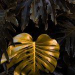 Botanicals ( 1 of  9 )