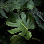 Botanicals 5 ( of 9 )