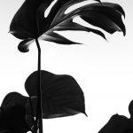 Botanicals 6 ( of 9 )