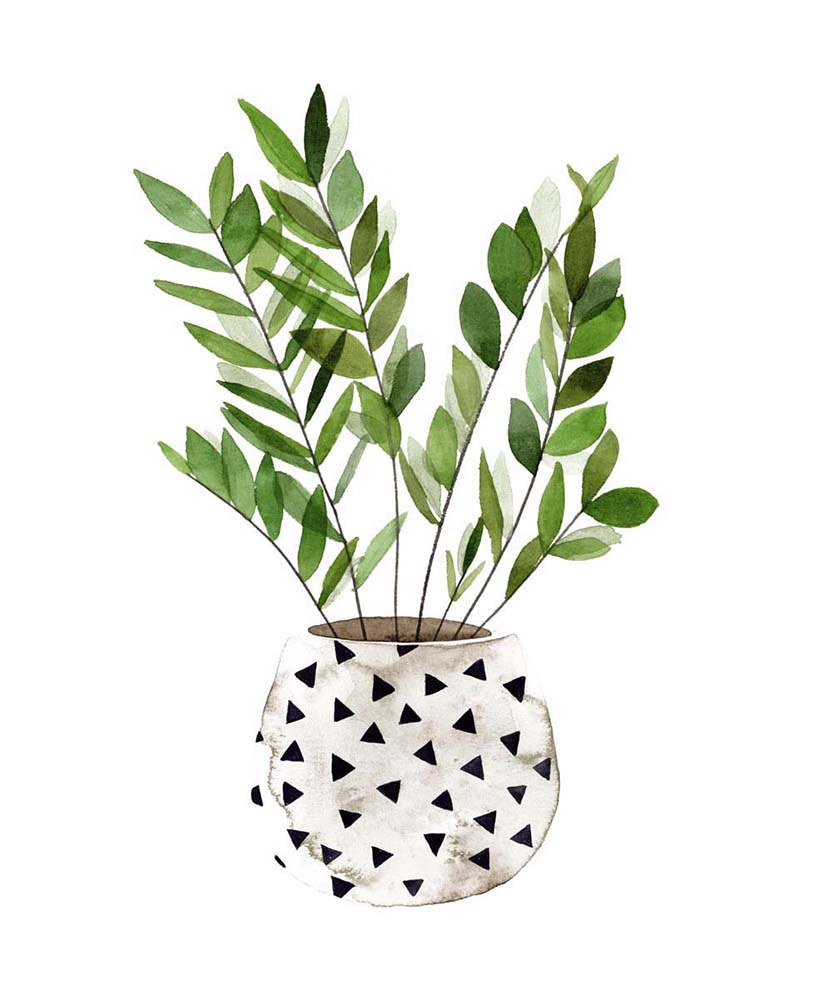 Plant in a Pot III