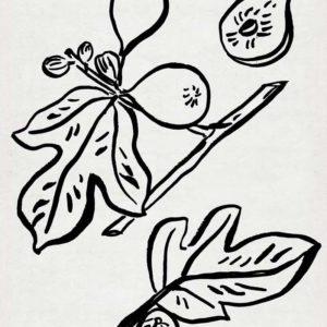 168964Z Fig Season I