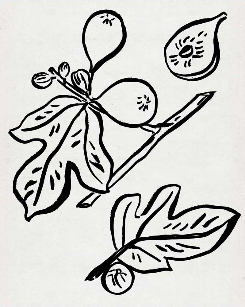 Fig Season I