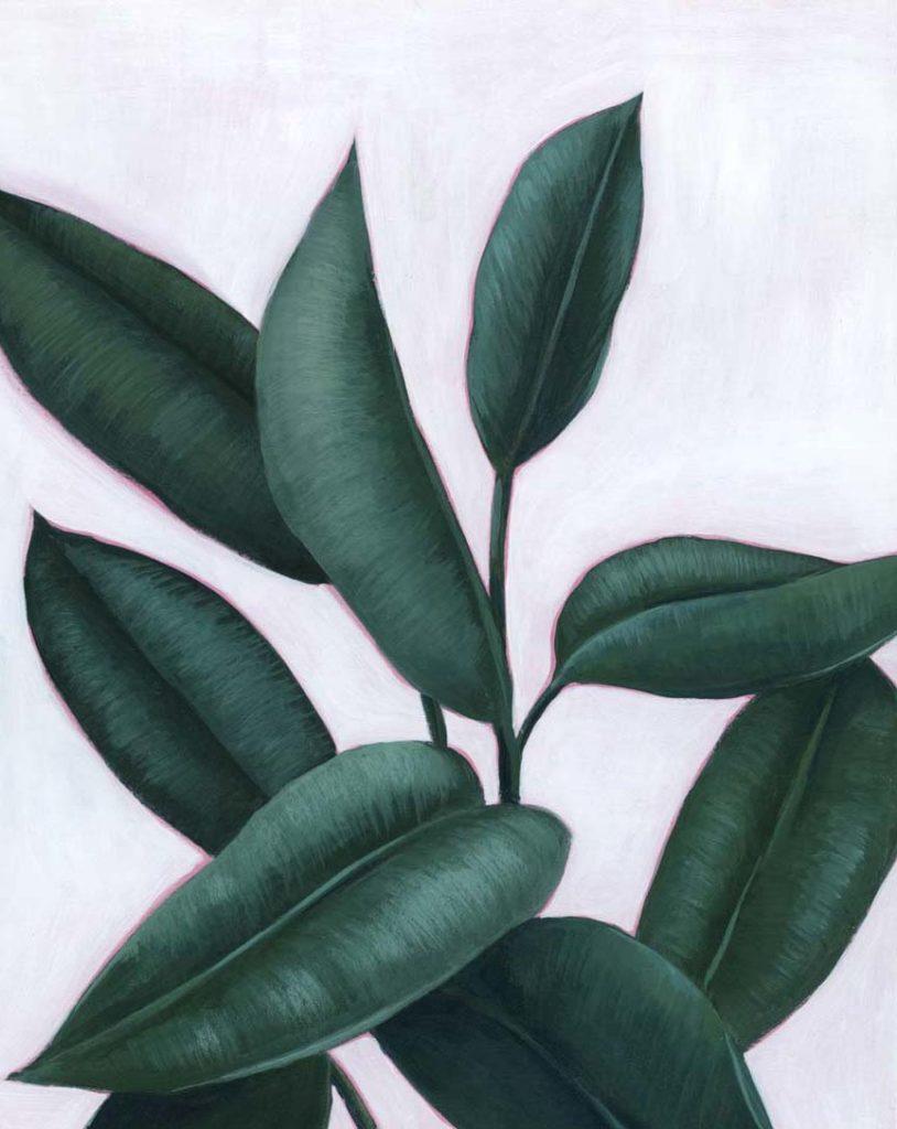 Verdant Ficus II
