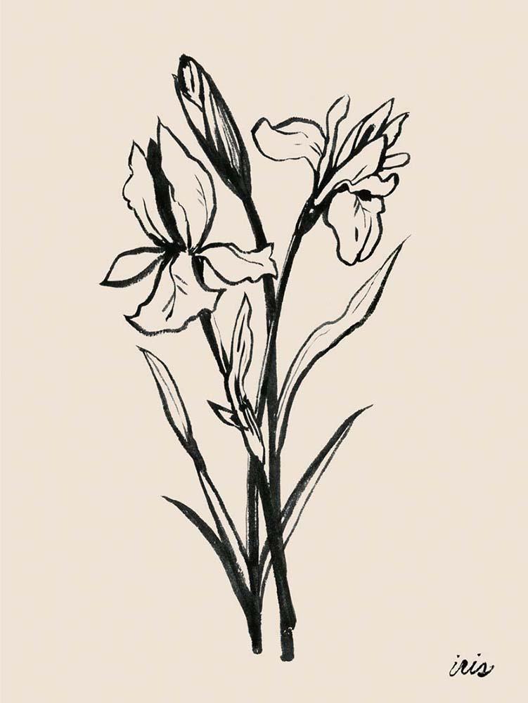 Iris Sketch I