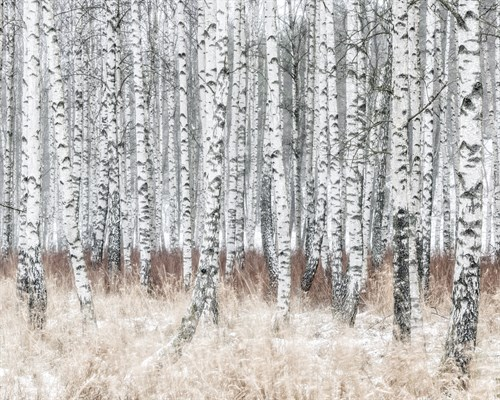 The Silver Forest - 500 x 400, 710 x 560, 1000 x 800 mm