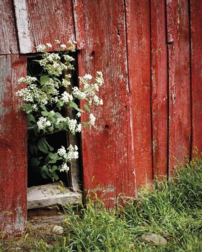 Blooming Between - 400 x 500, 560 x 710, 800 x 1000 mm