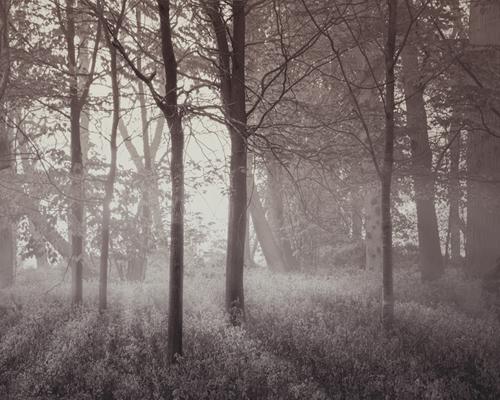 Forest Glow - 500 x 400, 710 x 560, 1000 x 800 mm