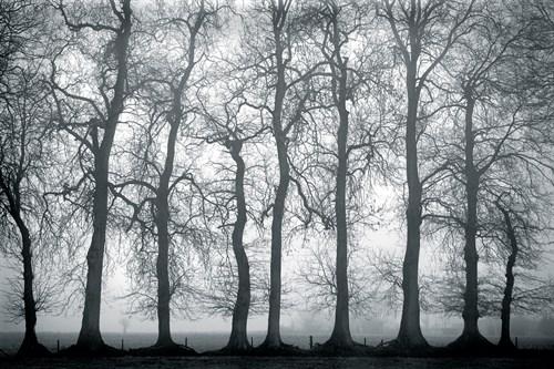 Silver Mists - 750 x 500, 900 x 600,  1200 x 800,  1800 x 1200 mm
