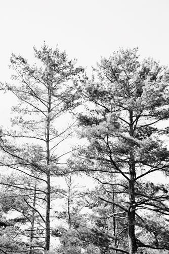 Tree Tops - Cluster - 500 x 750, 600 x 900, 800 x 1200, 1200 x 1800 mm