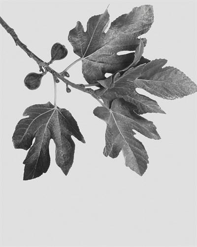 Noir Study - Soar- 400 x 500, 560 x 710, 800 x 1000 mm